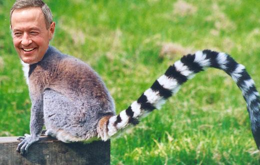 ring-tailed-lemur martin omalley