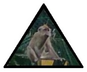 road sign monkey